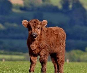 De 5 Beste Goede Doelen Voor Dieren