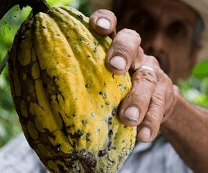 5 Redenen Waarom Je NOOIT Meer Fairtrade Wilt Kopen