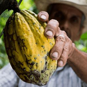 fairtrade cacao boon